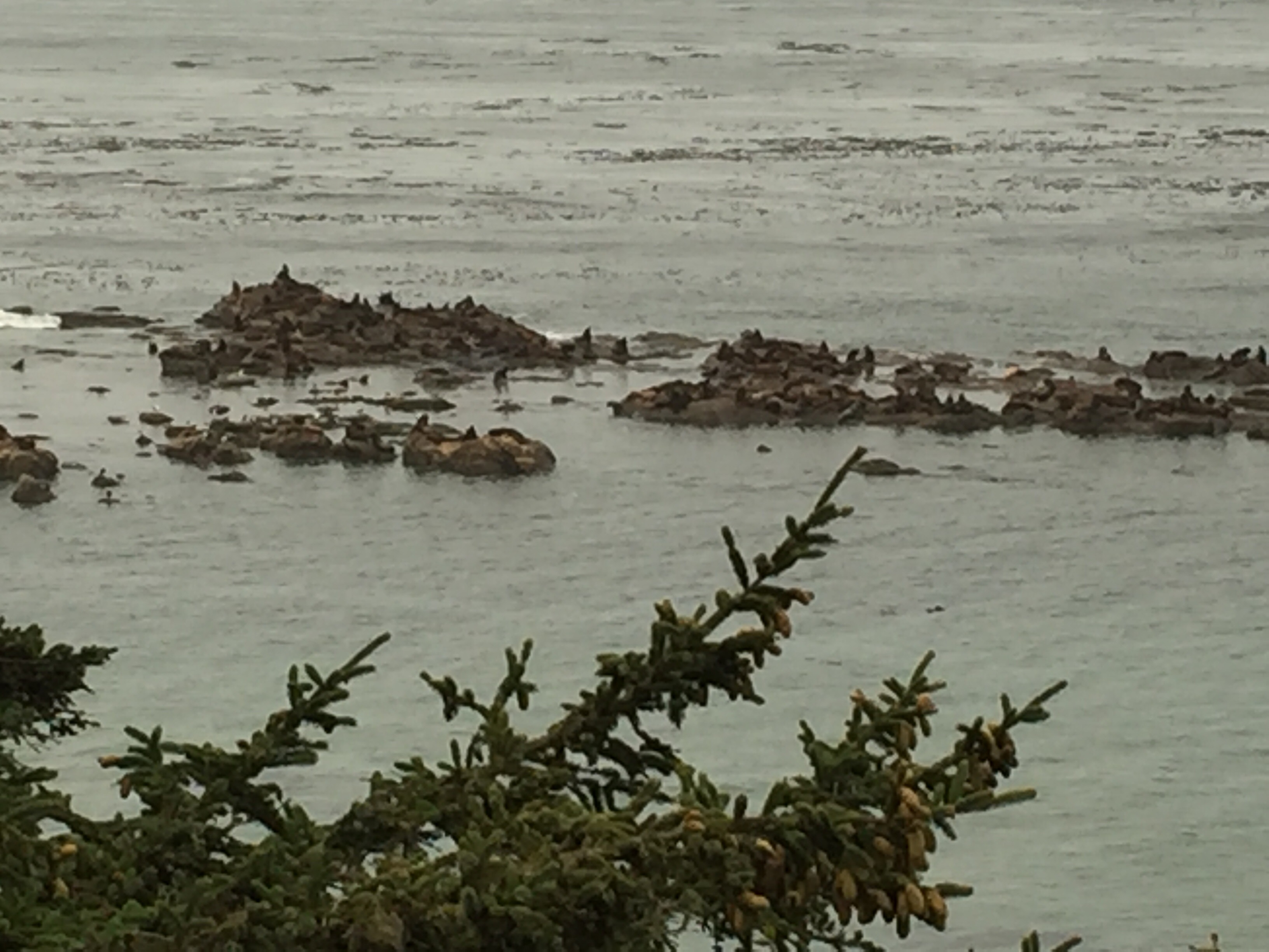 There Were Signs At One Overlook With Pictures Of All The Different Seals And Sea Lions So You Could Figure Out Who Was They Just Seemed To Make